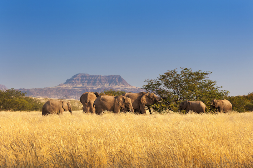 Herd of Elephants in Sossusvlei, Namibia