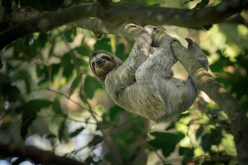 Places Where Sloths Live in the Wild