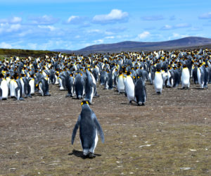 Places Where Penguins Live in the Wild
