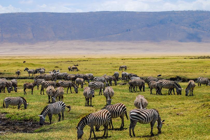 Where do Zebras Live